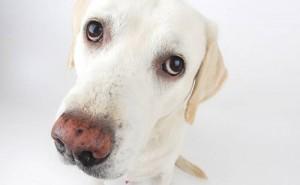 τροφές Σκύλος