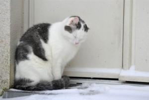 Ρωσία Γάτα βρέφος