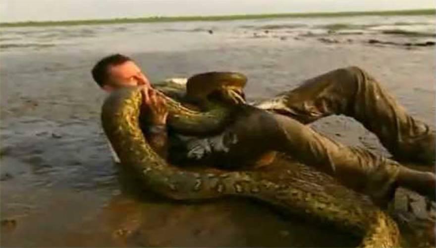 man anaconda
