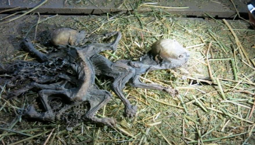 mystery-carcasses