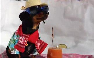 O πιο cool σκύλος απολαμβάνει το χιόνι (βίντεο)