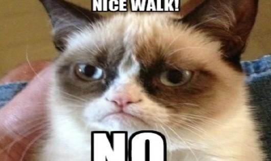 Η πιο τεμπέλα γάτα! Κάνει την ψόφια για να μην πάει βόλτα!