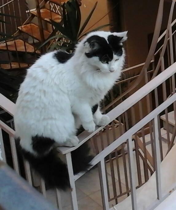 Γάτα αδέσποτο
