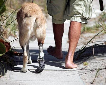 τραυματισμός πρόσθετα μέλη ζώα