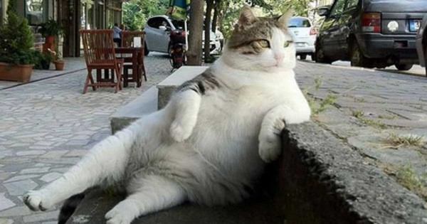 Φωτογραφίες από τρομερές γάτες που κάθονται με πολύ αστείο τρόπο!