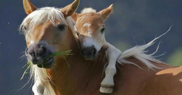 16 όμορφες εικόνες με ζώα που γνωρίζουν πολύ καλά τι είναι αγάπη!
