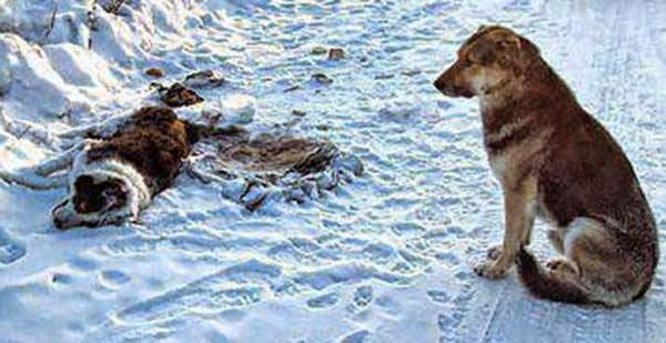 Μπροστά στην αγάπη των ζώων η αγάπη των ανθρώπων είναι μηδαμινή…