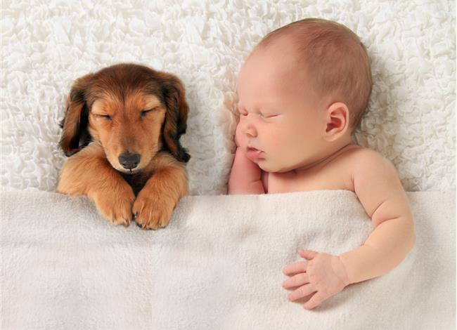 υγεία Σκύλος παιδιά κατοικίδια Γάτα αλλεργίες