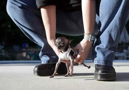 Τα μικρότερα ζώα στον κόσμο