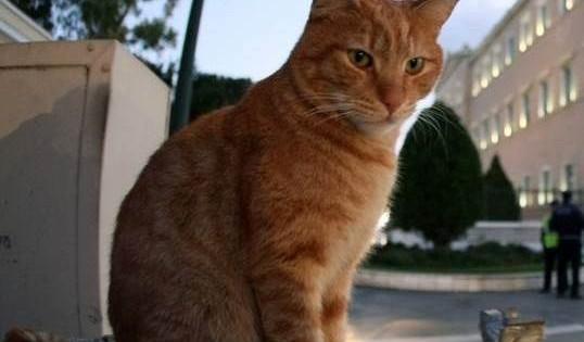 Πτολεμαΐδα: Οι πυροσβέστες έσωσαν την γάτα που είχε σφηνώσει στην κονσέρβα