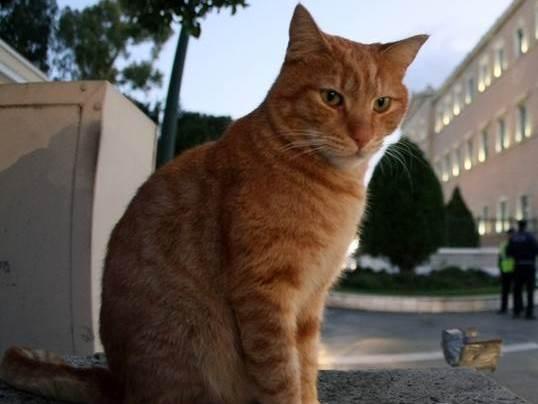 πυροσβεστική Πτολεμαΐδα κονσέρβα διάσωση Γάτα