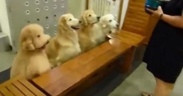 Δείτε τι κάνουν αυτά τα τρομερά σκυλάκια! Σκέτη γλύκα! (βίντεο)