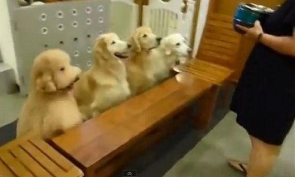 φαγητό σκυλιά προσευχή