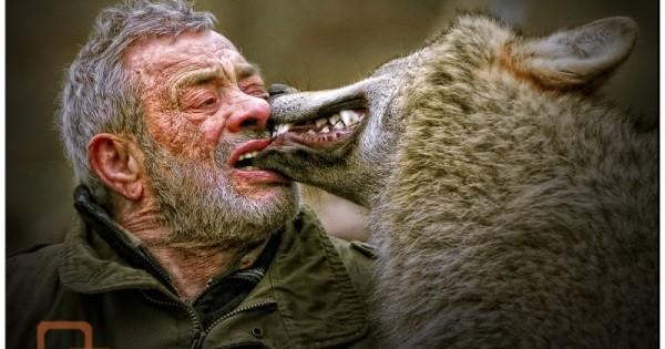 Κάνει παρέα 40 χρόνια με λύκους όμως η τελευταία φωτογραφία θα σας τρομάξει!