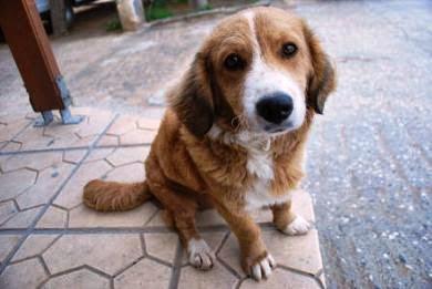 7+1 λόγοι για να ΜΗΝ υιοθετήσεις έναν ημίαιμο σκύλο