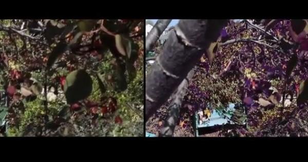 Έχετε αναρωτηθεί πως βλέπουν τα ζώα τον κόσμο; (Video)