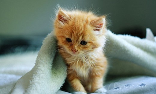 Αυτά τα γατάκια σίγουρα θα σου φτιάξουν τη μέρα