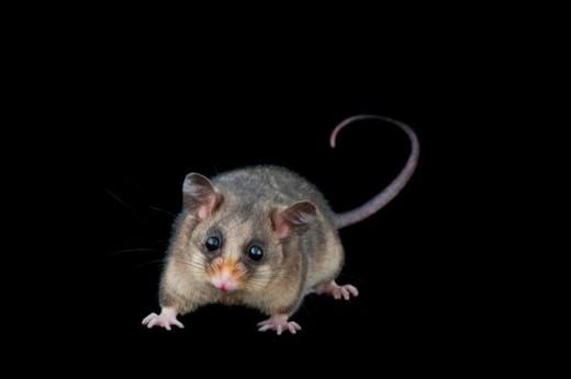 σπανιότερα ζώα σπάνια ζώα