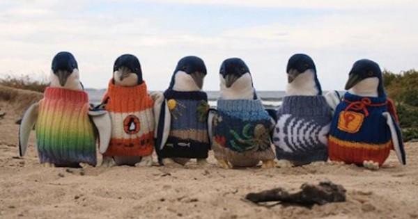 Αυστραλός 109 ετών πλένει πουλόβερ για πιγκουίνους!