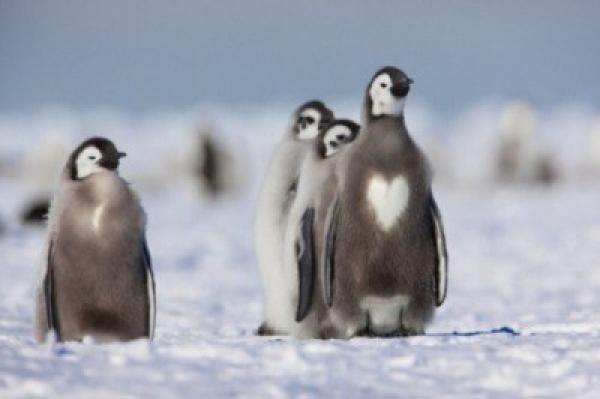 καρδιά ζώα Άγιος Βαλεντίνος