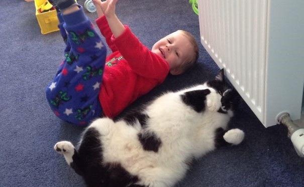 Σκύλος παιδιά κατοικίδια ζώα Γάτα
