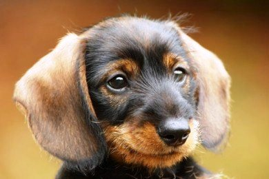Μπορούν τα σκυλιά να καταλάβουν τι λέμε; Τι λένε οι έρευνες