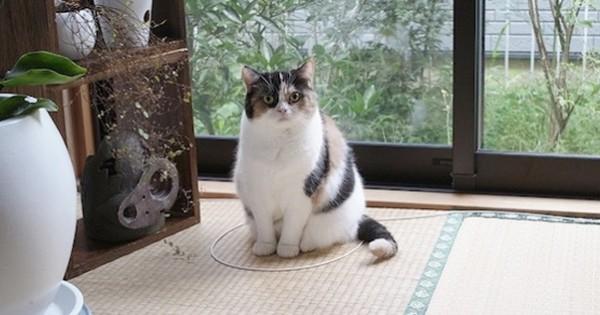 ΚΟΛΠΟ: Πώς μπορείτε να… παγιδέψετε μια γάτα