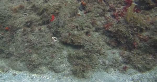 Μπορείτε να διακρίνετε ποιο μεγάλο ζώο κρύβεται σε αυτό το υποθαλάσσιο σκηνικό; (βίντεο)