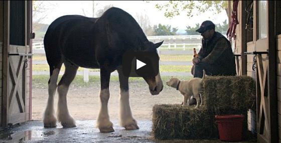 Οι καλύτεροι φίλοι: Ο χαμένος σκύλος, το αφεντικό του και τα άλογα που τους βοηθούν να ξανασμίξουν