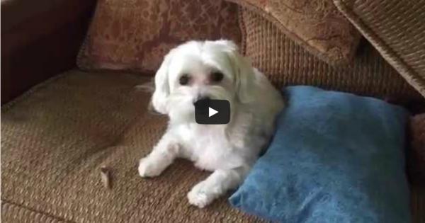 Ξεκαρδιστικό βίντεο: Το σπίτι είναι άνω κάτω και ο ένοχος σκύλος είναι απλά απολαυστικός!