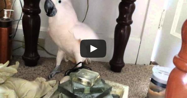 Ξεκαρδιστικό βίντεο: Η υστερική αντίδραση ενός παπαγάλου που δεν θέλει να πάει στον κτηνίατρο!