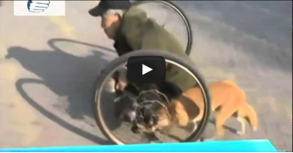 O σκύλος που βοηθά το ανάπηρο αφεντικό του (vid)