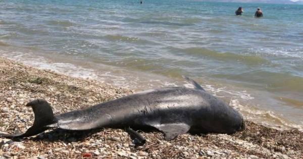 Νεκρό δελφίνι Ξεβράστηκε σε παραλία της Κρήτης