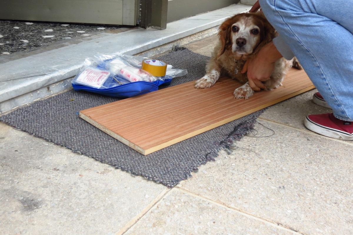 φόλα τροχαίο Σκύλος Πρώτες βοήθειες Δηλητηρίαση Γάτα