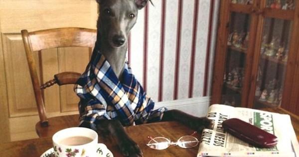 Γνωρίστε τον Rupert: Ο σκύλος που νομίζει ότι είναι άνθρωπος