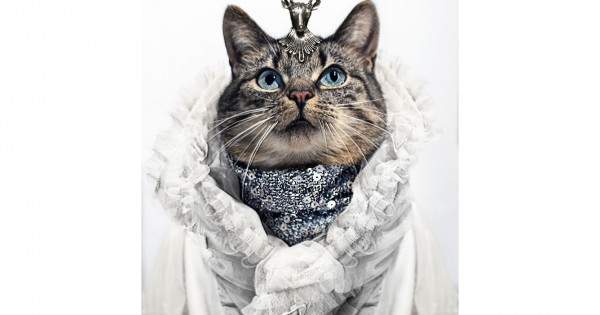 Η πιο μοδάτη γάτα του διαδικτύου!