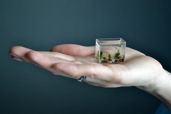 Smallest_Aquarium_1