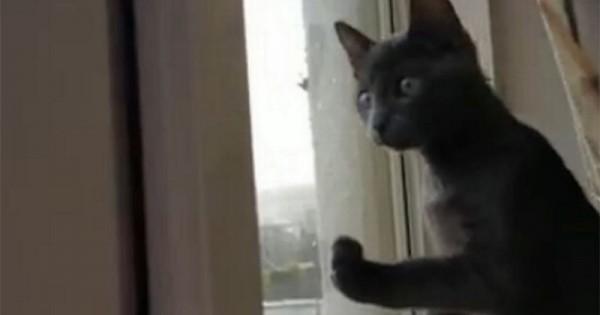 Γάτα βλέπει για πρώτη φορά χιόνι και… τρελαίνεται!
