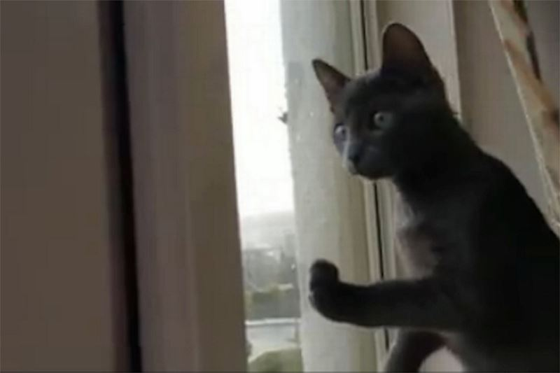 TEASER-Kitten-sees-snow-for-the-first-time