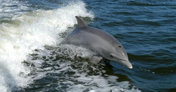 Τα δελφίνια των ελληνικών θαλασσών