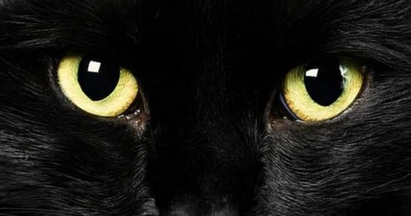 Γιατί οι μαύρες γάτες θεωρούνται κακότυχες