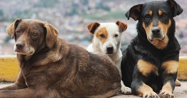 Ιωάννινα: Ο Δήμος δημιούργησε γραφείο για τα αδέσποτα ζώα!