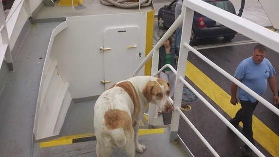 «Έφυγε» η σκυλίτσα που λάτρευε τις βόλτες με… το ferry!