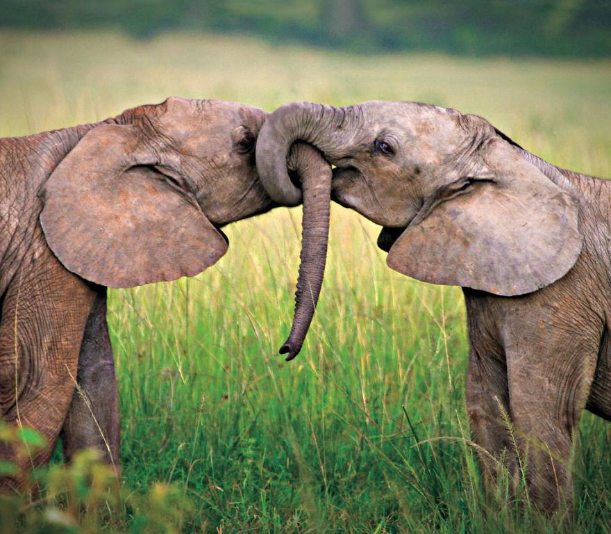 animal-couples