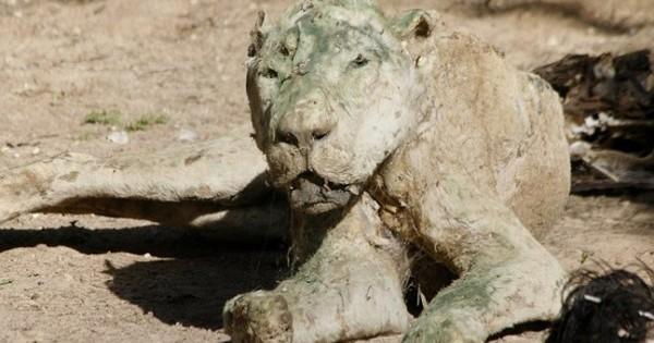 Σκληρές εικόνες: Δεκάδες νεκρά ζώα σε ζωολογικό κήπο της Γάζας