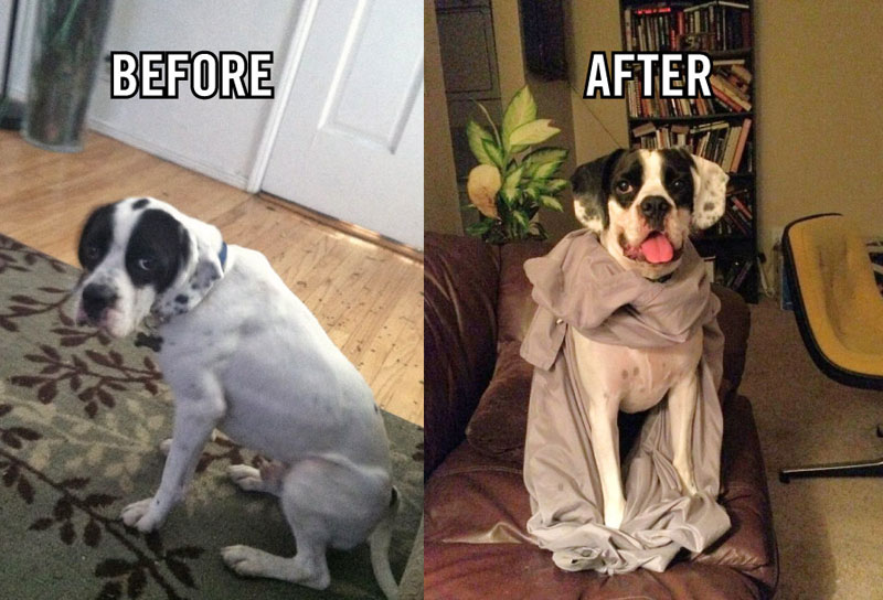 Σκύλος ιυοθεσία αδέσποτο