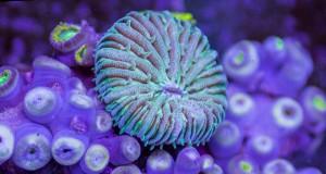 Η εκπληκτική υποβρύχια ζωή!