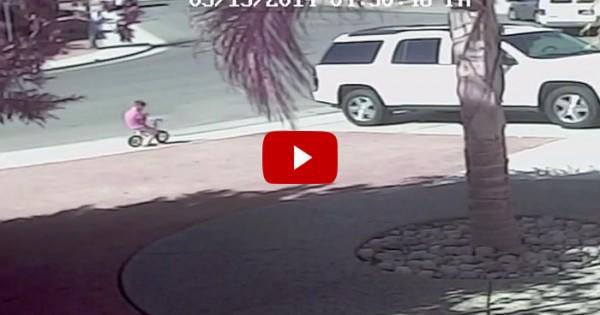 Γάτα σώζει αυτιστικό αγοράκι από την επίθεση αγριεμένου σκύλου (βίντεο)