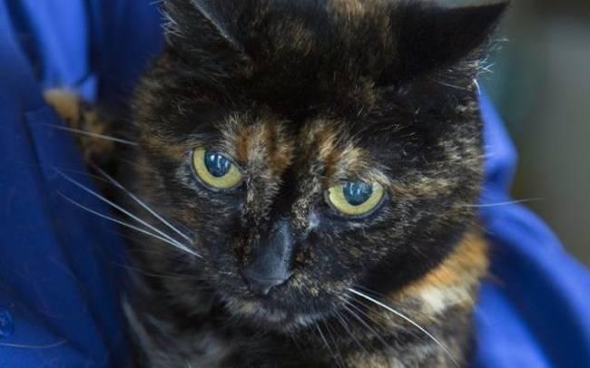 ηλικιωμένη γάτα Γάτα
