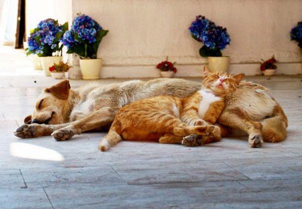σκύλοι μαξιλάρια γάτες